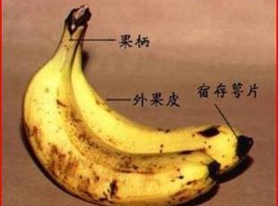 Healthy Things a Banana Can Do for You Recipe