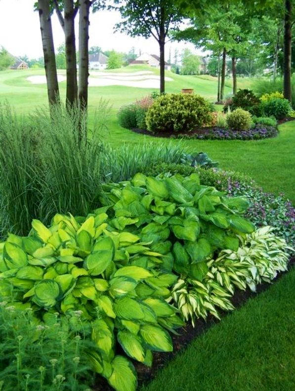 Hostas Garden Hosta Garden Ideas Pinterest