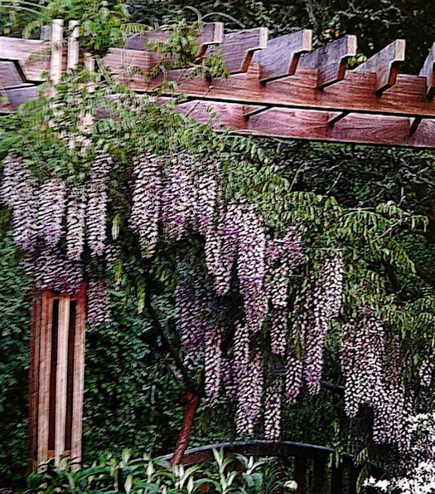 Pergola wisteria garden pinterest for My dream home com