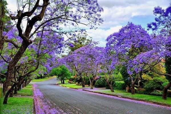 A street in Sydney, Australia.