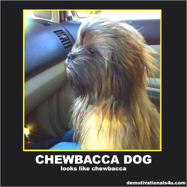 May The Fourth Be With You Wookie: Chewbacca Dog.