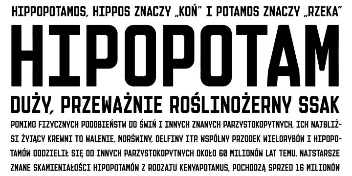 Olifant font and @amy fontenot face web font by hipopotam studio