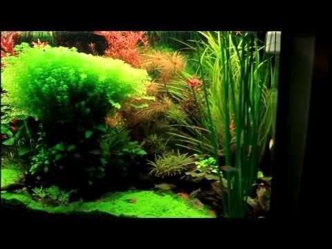 460 L Dutch Aquarium Planted tank Pinterest