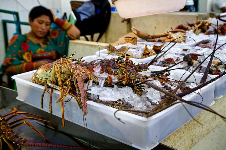 Panama city fish market amazing faces places pinterest for Fish market panama city beach