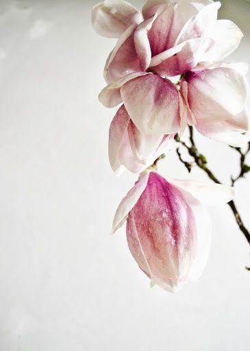 Magnolia- Love of Nature