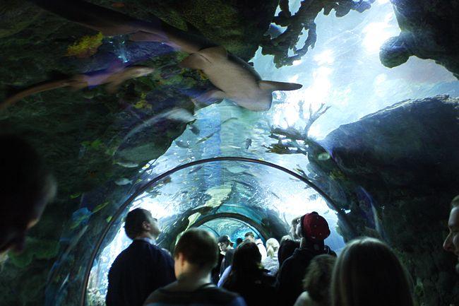 mall of america trip aquarium bloomington attractions