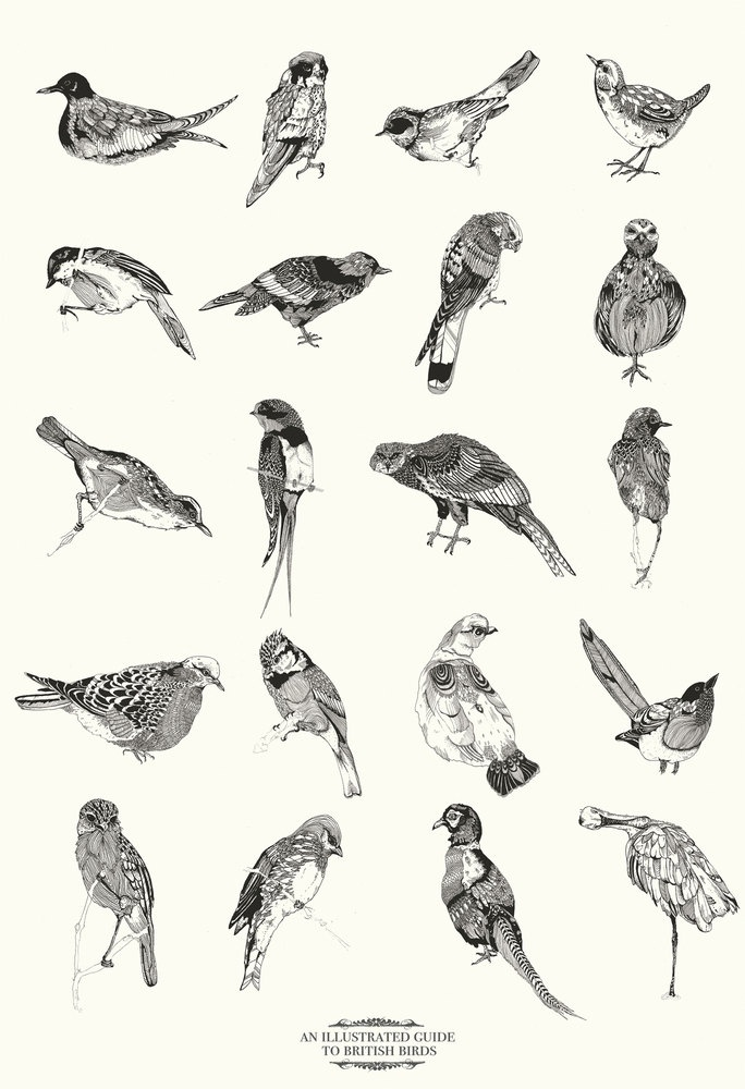 Chrysa Koukoura bird print