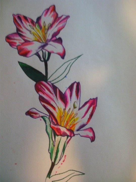 Drawings On Pinterest
