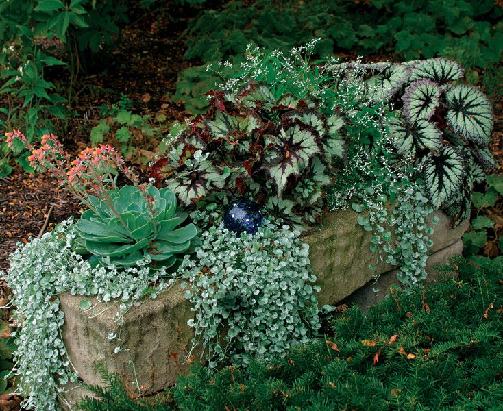 Shade container container gardening pinterest - Container gardens for shade ...