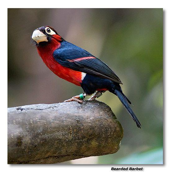 cool looking   birds   Pinterest