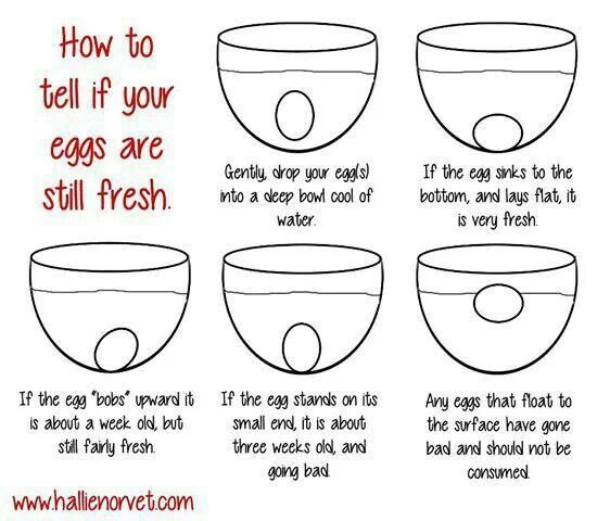 how to find fresh eggs