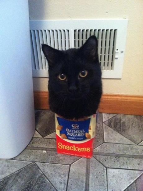 cat trap box