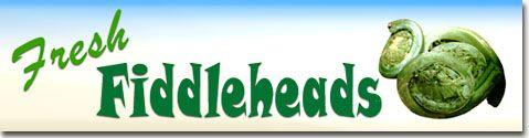 Fresh Fiddleheads - Fiddlehead Greens | recipes to try | Pinterest