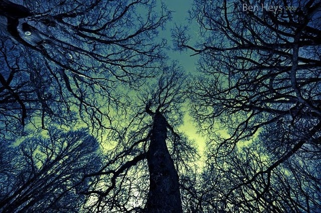 As above so below trees pinterest