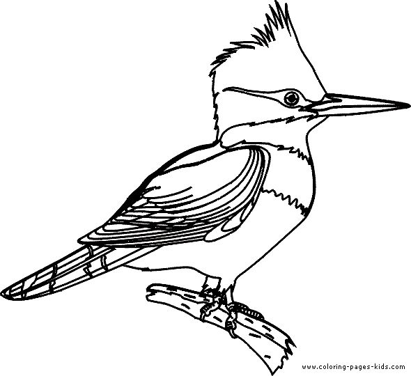 Kingfisher Coloring Page Visual Journal Pinterest