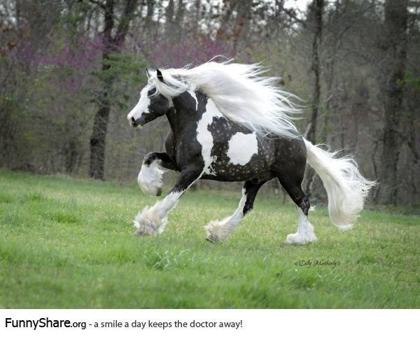 Most beautiful horse I have ever seen... | Funny Pics ...