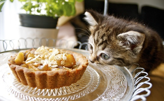 ... of honey' and apple tartlets with a olive oil and buckwheat crust