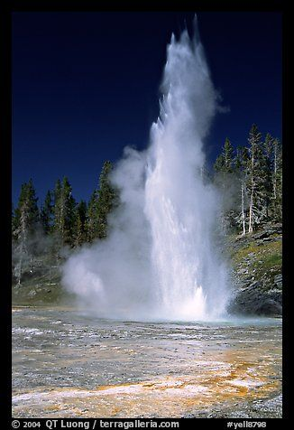 Grand Geyser, the tallest of the regularly erupting geysers in the Park. Yellowstone National Park, Wyoming, USA.