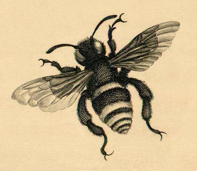 Surinam - bee