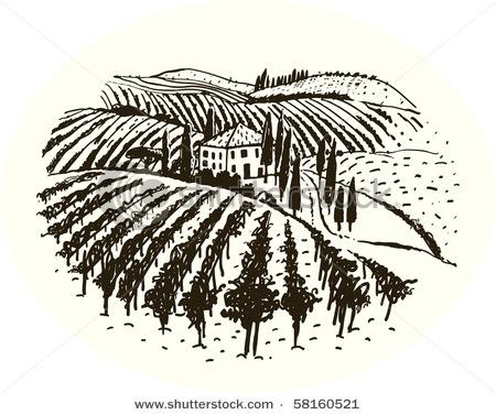 Vineyard Sketch Stock Images, Royalty-Free Images ...