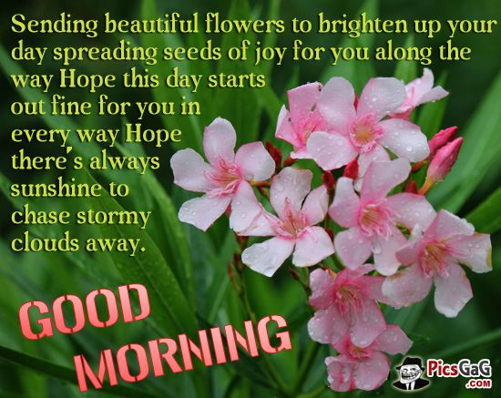 Flowers Good Morning Quote | Good morning quote | Pinterest