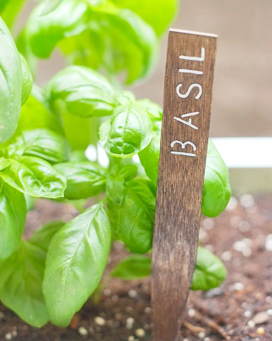 diy herb garden signs gardening pinterest