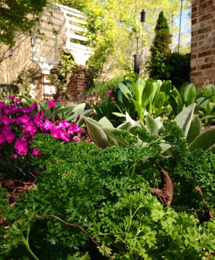 Cottage Garden Perennials And Herbs Gardens And