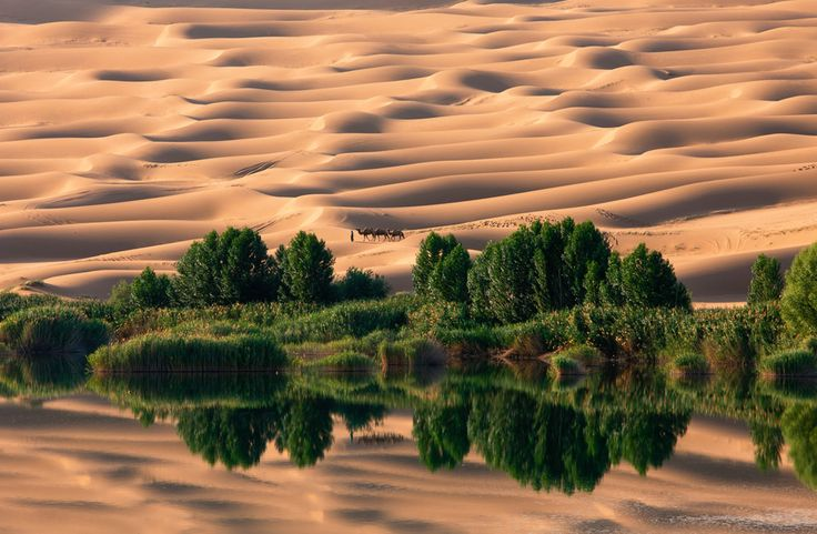 Oasis. (Photo and caption by Nam In Geun)