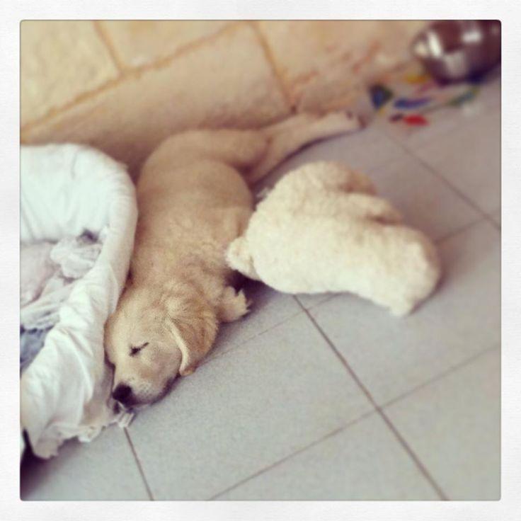 Sleeping ZzzZz