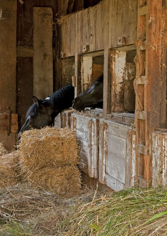 Horses In Their Stalls In An Old Barn Let 39 S Horse Around