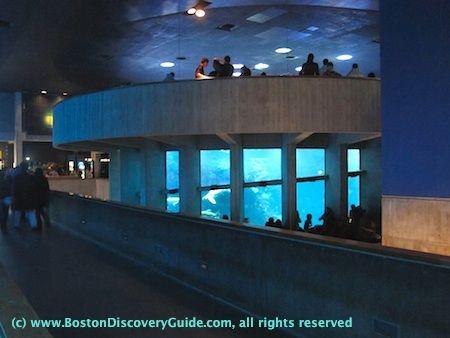 Boston Aquarium Places I Have Been Pinterest