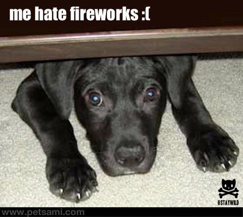 Dog Fireworks Funny Video