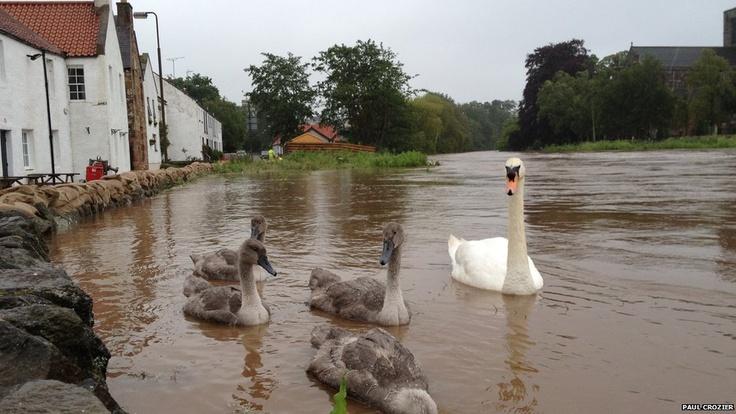 Haddington United Kingdom  City new picture : Rain lashed Scotland, july 2012. Swans in Haddington