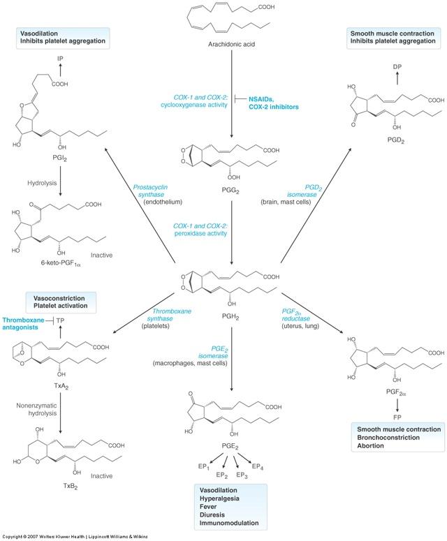Arachidonic acid - Wikipedia
