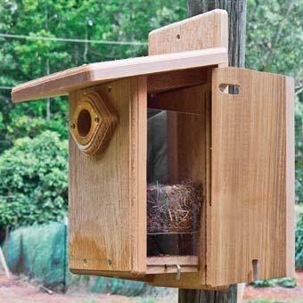 Ultimate Bluebird House Outdoor To Do Pinterest