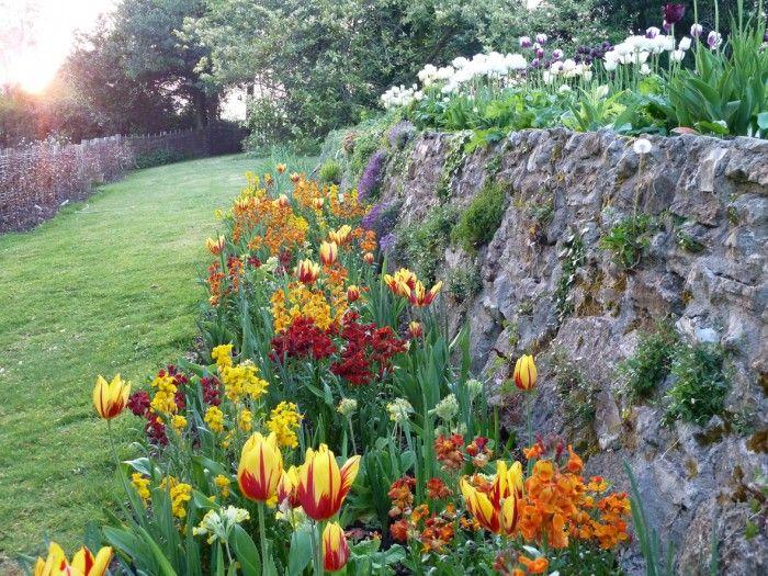 beautiful tulips in the border garden variety Pinterest