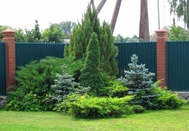 Дизайн клумб с хвойными растениями