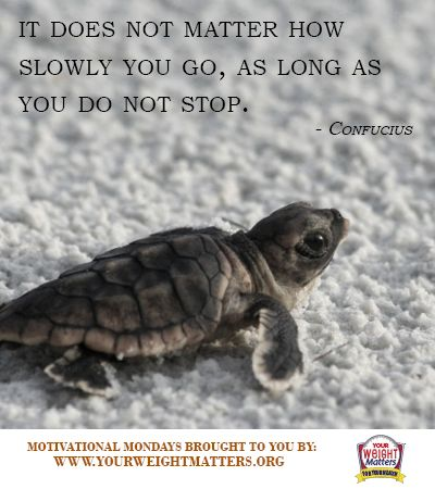 inspirational turtle quotes quotesgram
