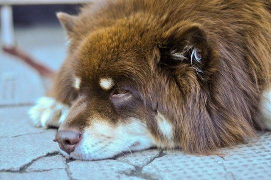 Fluffiest cutest dog ever sooooo cute pinterest