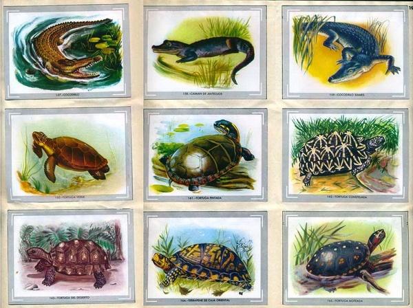 Reptiles cromos
