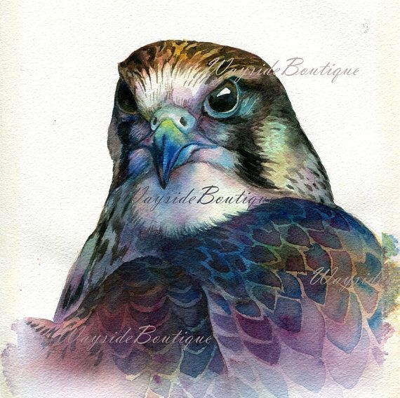 Hawk painting watercolor - photo#3