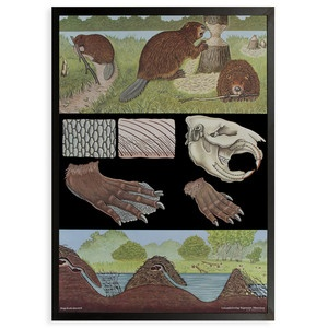 Beaver Framed Print now featured on Fab.