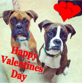 valentines day boxers