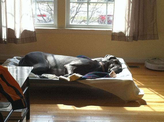 how to keep dog off bed