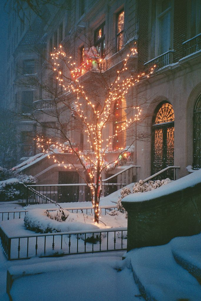 Новый год забытый сад в снегу