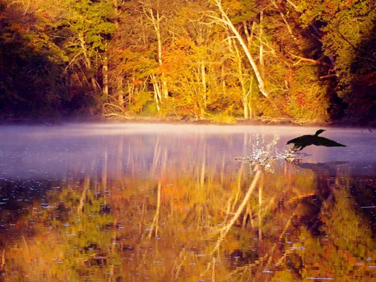 Sharing the beauty of Delaware's tranquil landscapes