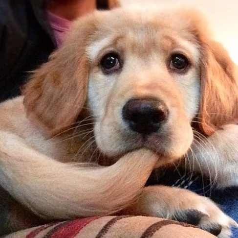 usa purse puppy   llt3vable