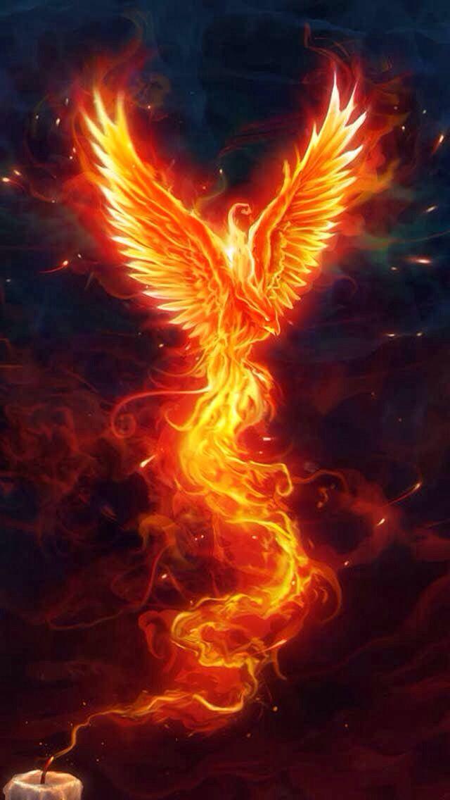 rise like a phoenix eurovision final