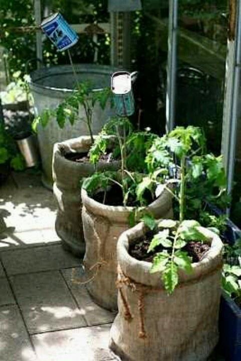 5 Gallon Bucket Burlap Tomato Plant Gardens Pinterest 400 x 300