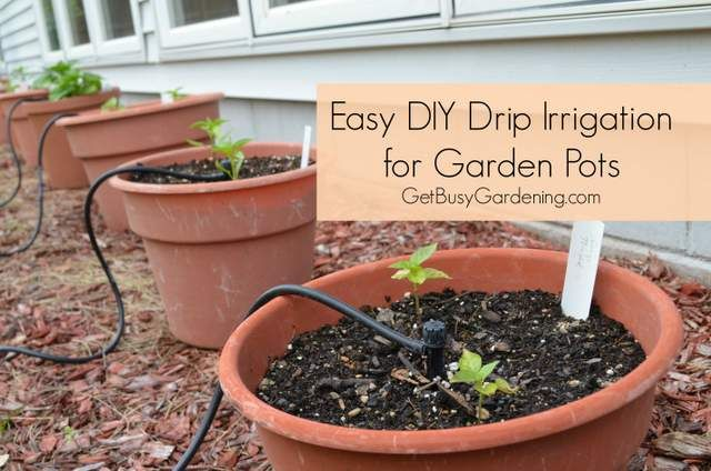 Pin by coni webster on garden pinterest - Diy drip irrigation systems ...